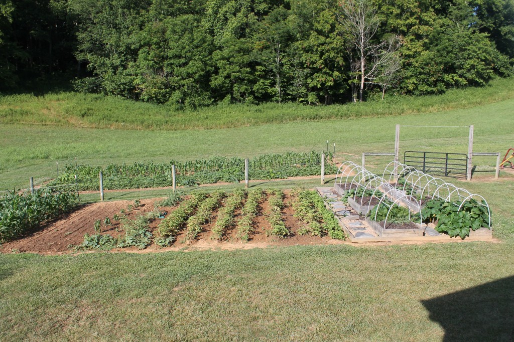 Vegetable Garden June 24