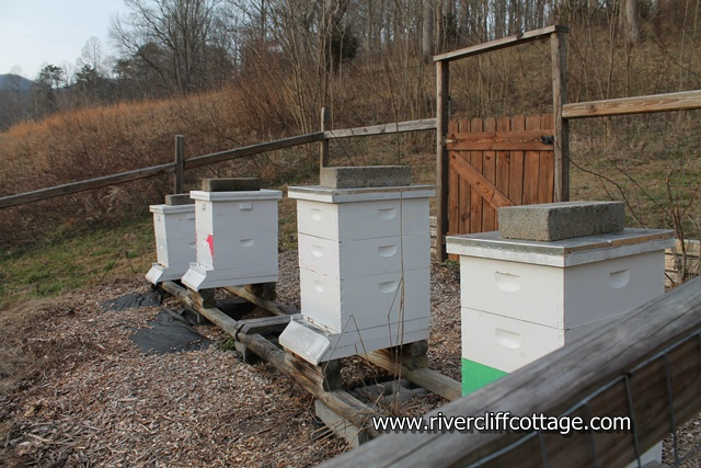 Bee Hives January