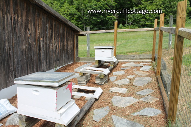 Apiary in May