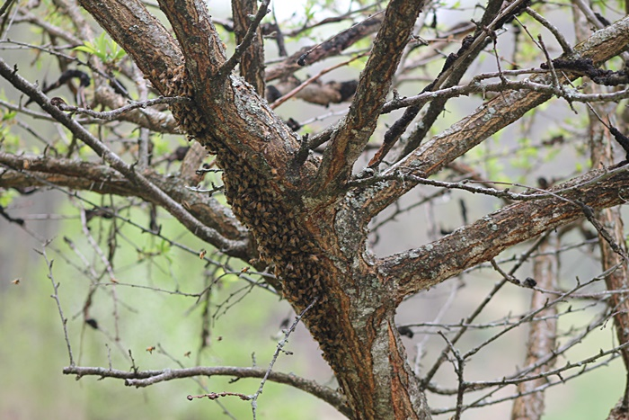 Bees on Tree 1