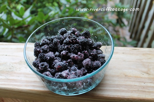 Blackberries With Sugar