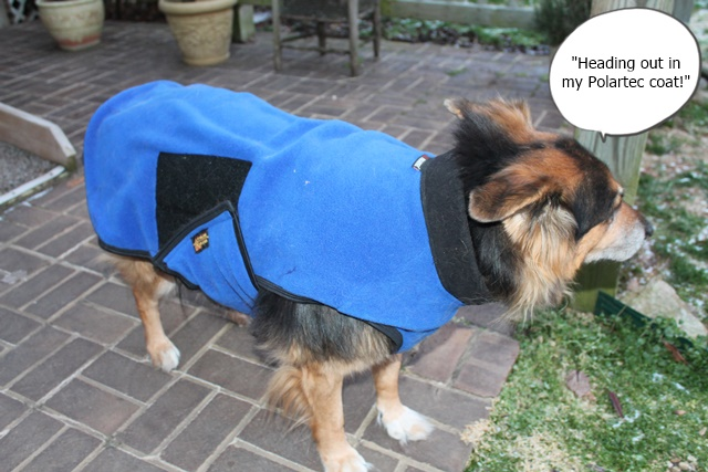 Luckie Wearing PolerTek Dog Wear