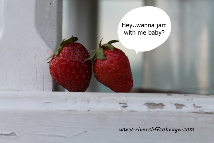 Strawberries Talking