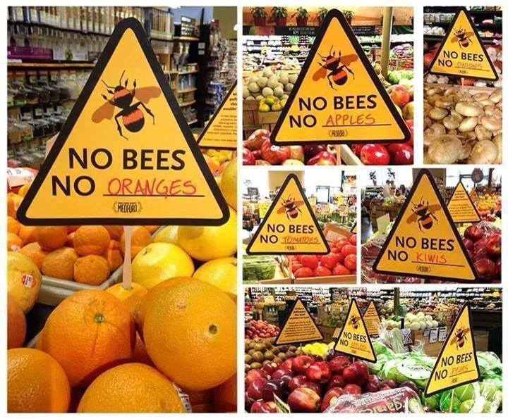 Imagine A World Without Them Bees